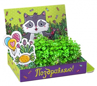 Подарочный набор Живая открытка Поздравляю!